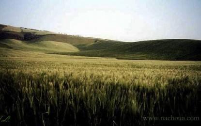Medjez El-Bab: L'Etat récupère 8 hectares de terres agricoles