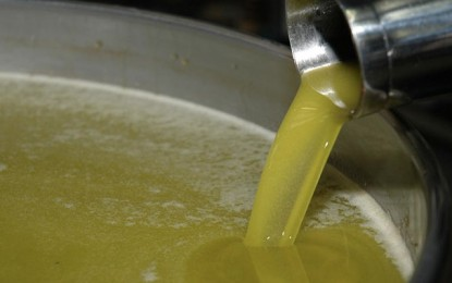 Les exportations d'huile d'olive ont atteint 1.139 millions de dinars