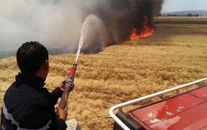 Jendouba : Incendie maitrisé dans un champ de blé