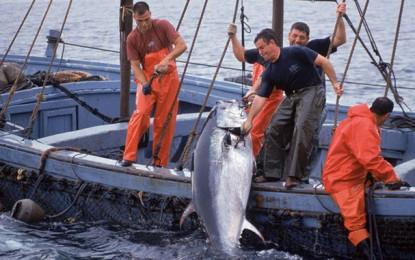 Pêche au thon : Le quota de la Tunisie fixé à 1247 tonnes
