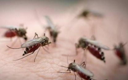 Le tout chimique est-il pertinent dans la lutte contre le moustique?