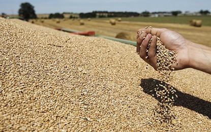 Céréales: La Tunisie importe 84.000 tonnes de blé tendre