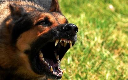 Sejnane: Mordu par son chien, il meurt de la rage