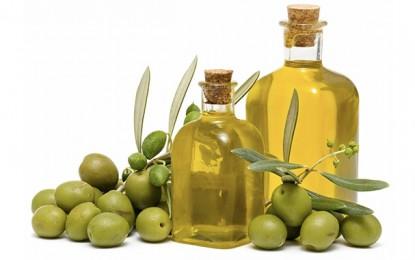 Tunisie : La production d'olives sera réduite de moitié l'année prochaine