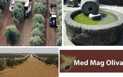 Agriculture: Sousse abritera le 3e Salon 'Med Mag Oliva'
