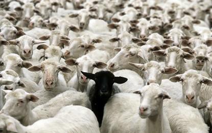 Mouton de l'Aïd : Où acheter moins cher ?