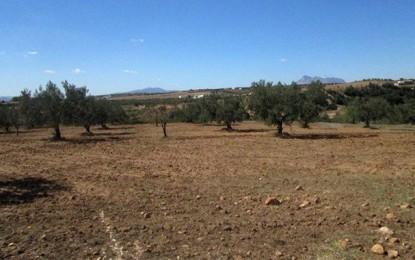 Kairouan : Découverte du corps d'une jeune fille dans une oliveraie