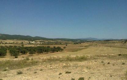 Mahdia: Un adolescent retrouvé pendu à un olivier