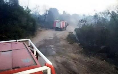 Tabarka : Un incendie détruit 50 Ha de forêts