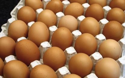 Consommation: Le prix des oeufs fixé 150 millimes