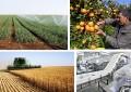 L'Aleca risque de constituer le coup de grâce  pour l'agriculture tunisienne