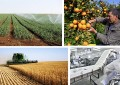 Tunisie : Investissements agricoles en hausse de 17,6% (fin avril 2018)