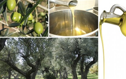 L'huile d'olive en Tunisie : Etat des lieux et mesures  promotionnelles