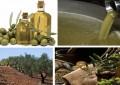 Des idées pour valoriser l'huile d'olive tunisienne à l'export