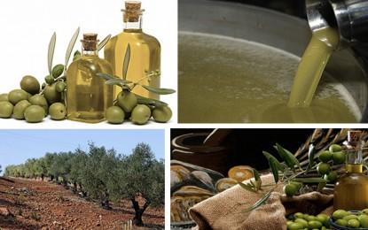 Europe : Accès amélioré pour l'huile d'olive tunisienne