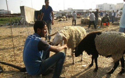 Aïd El-Idha : 55% des familles tunisiennes n'achèteront pas de mouton