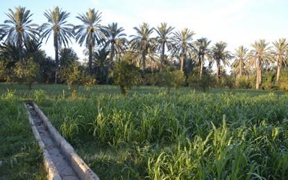 Environnement : Pour qu'on n'achève plus les palmiers à Gabès !