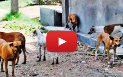 Des chiens et des vaches rôdent à l'intérieur d'un collège à l'Aouina