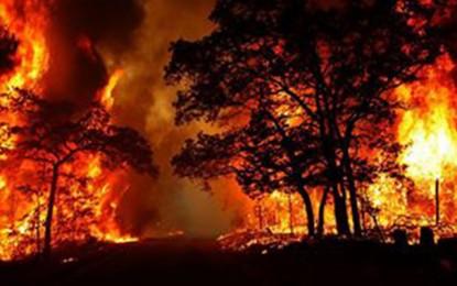 Bizerte : 20 hectares ravagés par un incendie dans la forêt de Bechatter