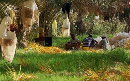 Atelier à Tozeur sur la gestion adaptative des systèmes oasiens