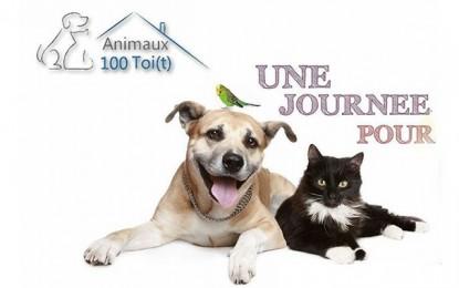 La Marsa : Campagne de stérilisation des chiens errants
