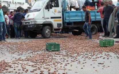 Kébili : Les producteurs de dattes en colère
