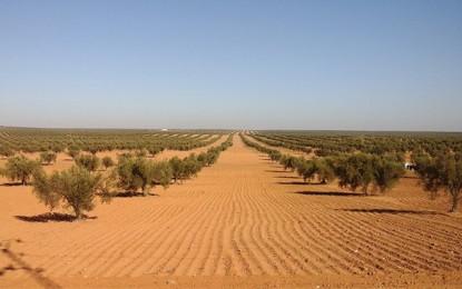 Tunisie : Prospective et stratégie oléicole à l'horizon de 2030