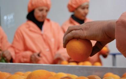 Agrumes : Hausse des exportations de maltaises sur le marché français