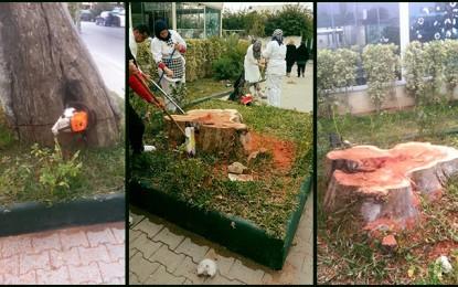 Environnement : «Massacre à la tronçonneuse» à Carthage