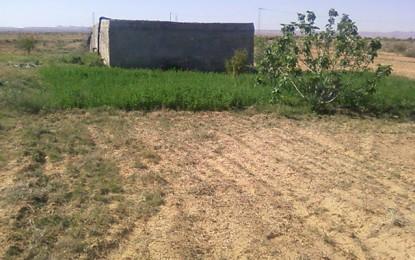 Gabès : Arrestation des présumés tueurs de l'agriculteur de Matmata