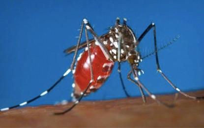 Virus Zika : La Tunisie appelle à la vigilance
