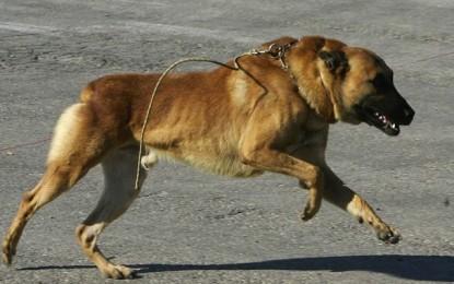 Kairouan : Un agriculteur sauve un enfant des crocs d'un chien errant