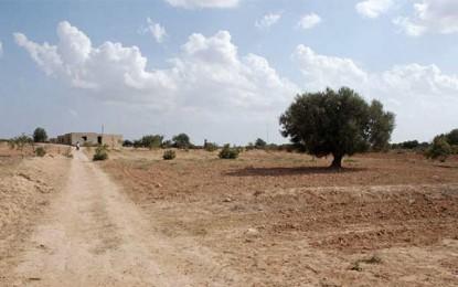 Face à la sécheresse, une stratégie d'adaptation s'impose en Tunisie