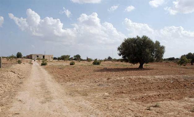 Secheresse-Tunisie