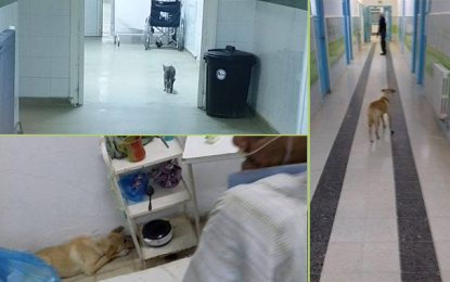 Des animaux se promènent à l'intérieur de l'hôpital de Gabès
