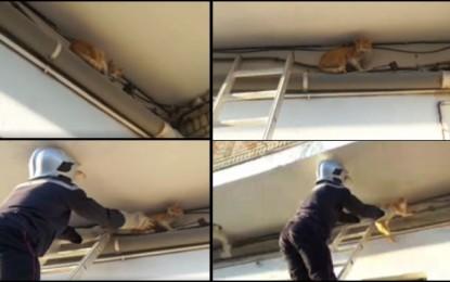 Tozeur : Il sauve une chatte et rend le sourire à un enfant