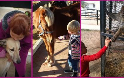 Le centre hippique de Mahdia au secours des enfants autistes