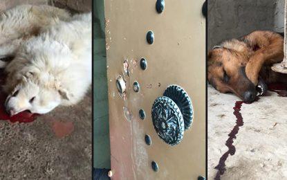 Hammam-Sousse : Il porte plainte contre des policiers qui ont tué ses chiens