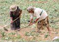 Néziha Labidi : Les femmes rurales auront droit à une couverture sociale