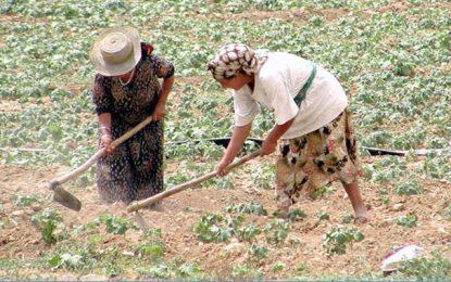 Tunisie : Plus de 80% de la main d'œuvre agricole est composée de femmes