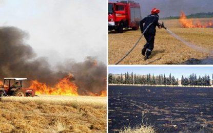 Téboursouk : Un incendie ravage 100 Ha de blé