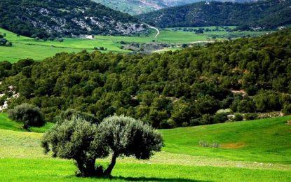 Tunisie : L'Etat a récupéré plus de 20.000 ha de ses terres