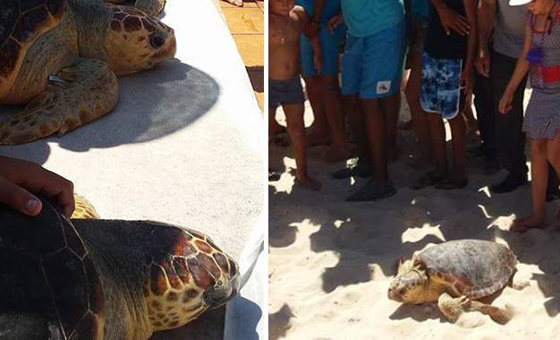 Relâche de tortues marines au large de Monastir Monastir-tortues