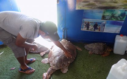 Sayada : Sauvetage de 3 tortues marines protégées