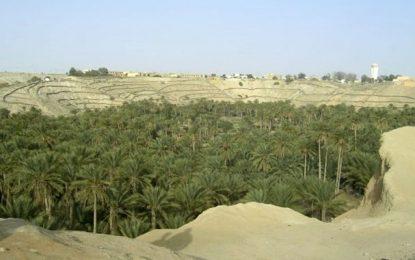 Nefta : Découverte d'un site archéologique vieux de 80.000 ans