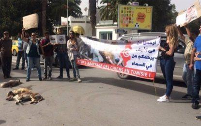 Marsa : Marche contre l'abattage des chiens errants
