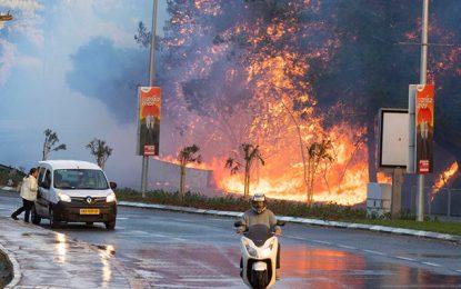 Incendies en Israël: Des «anti-israéliens» pointés du doigt