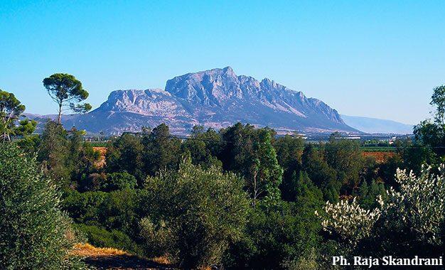 Sauvons Djebel Ressas, un petit coin de paradis défiguré par des affairistes véreux