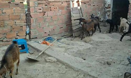 Rania La Fillette D Ouled Dhifallah N Est Pas Morte De Froid Kapitalis