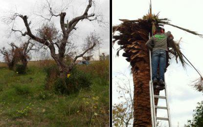 Atelier à Hammamet : Lutte contre le charançon rouge et la Xylella fastidiosa